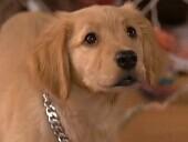 点击观看《《神犬也疯狂1》完整版》