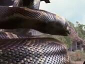 点击观看《巨蟒惊魂 完整版》