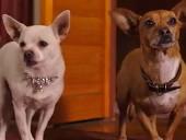 点击观看《《比佛利拜金狗2》高清完整版》