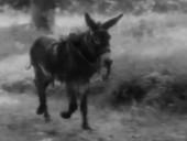 点击观看《《驴子巴特萨》完整版》