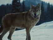 血狼犬 高清完整版