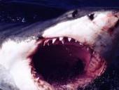 点击观看《《大白鲨》完整版》