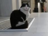 点击观看《伊斯坦布尔的猫 高清完整版》
